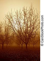 tono sepia, alba, e, nudo, noce, albero