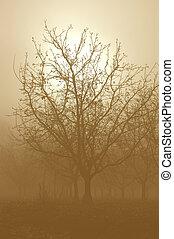tono sepia, nudo, noce, albero