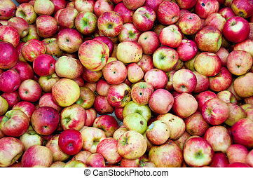 Multiple Apples in a box shown up close