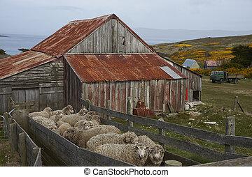 Hangar tonte mouton australie central yard entourer for Tonte pelouse tarif