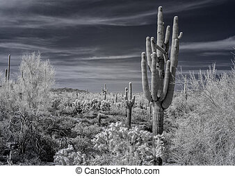 A desert view in the Tonto National Forest, Arizona.