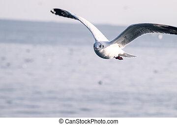 toon, helder, door, zee, alledaags, blauwe , levend, reizen, vliegen, hemel, jouw, verdoezelen, witte vogel, leven, natuur, achtergrond, dag, terugtocht, zeezicht, vlucht, groenteblik, zeemeeuw