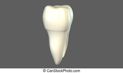Tooth - A tooth (plural teeth) is a small, calcified,...