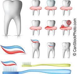 Dental Set - Tooth and Brush Dental Set Isolated on white...