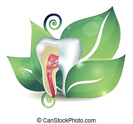 Tooth cross section and leaf. Bright abstract treatment concept