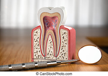Tooth model cross section with dental mirror tool on wooden table. Close up. Dental treatment and hygiene concept.