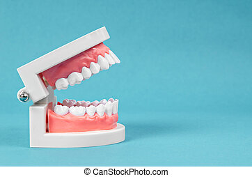 Tooth model on blue background.