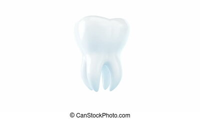 tooth spinning on its axis - tooth is isolated on a white...