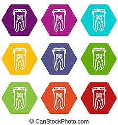 Tooth structure icons set 9