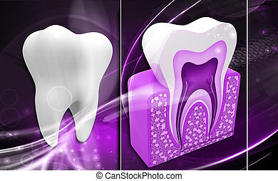 tooth structure - Digital illustration of tooth structure in...