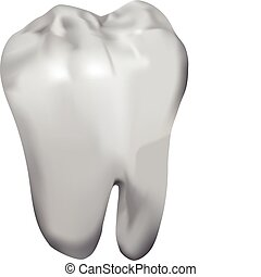 tooth - vector white tooth on white background