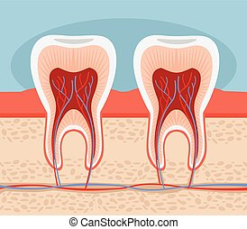 Tooth. Vector flat illustration