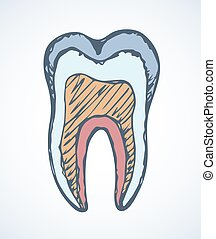 Tooth515.eps