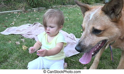 Toothless baby watching dog