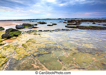 Toowoon Bay Reefs