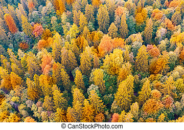 Top aerial view of colourful forest trees in the autumn season.