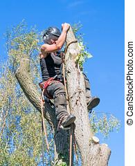 top., arbre, roped