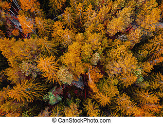 Top down aerial drone image of a forest. - Top down aerial...