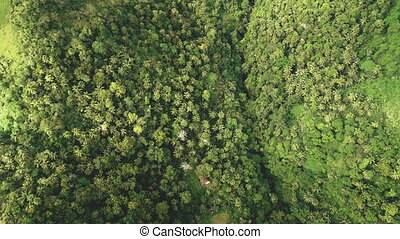 Top down tropical jungle aerial view: hilly rainforest on mountains at Legazpi, Philippines, Asia. Asian green nature landscape at summer day. Filipino landmark at drone shot