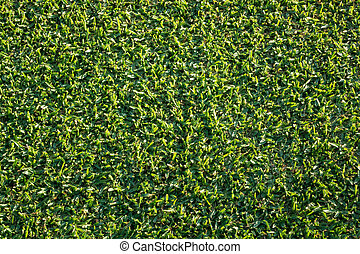 Top down view of newly mown grass lawn