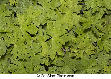 Top down view of wild plants