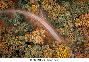 Top down view on path and autumn trees on park, Poland.