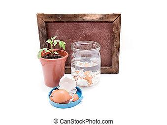 top-dressing, de, tomates, com, calcium., seedlings, de, tomates, e, casca ovo, em, um, jarro, com, água, ligado, um, fundo branco