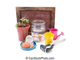 top-dressing, de, tomates, com, calcium., seedlings, de, tomates, e