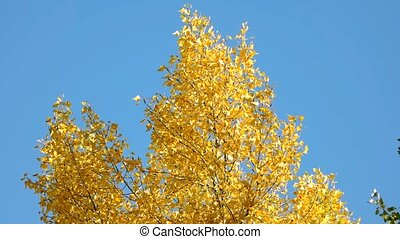 Top of a tree with yellow leaves.