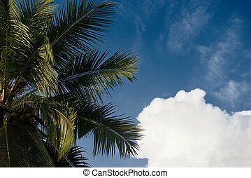 Top of coconut palm against a sky with fluffy white clouds