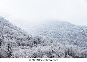 top of mountains covered with snow-covered pine forest in the fog
