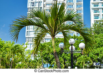 Top of palm in park with lamp and building