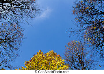 Top of trees in the blue sky