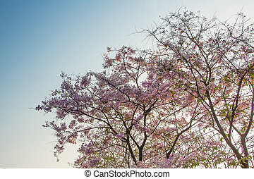 Top tree forest Pink flowers background