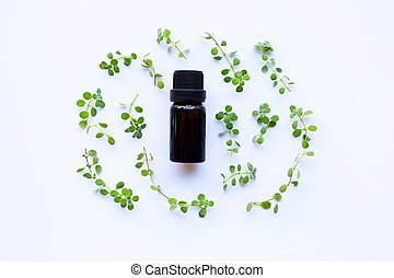 Bottle of essential oil with marjoram on white background.