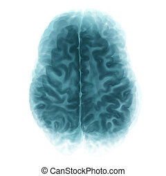 Top View Brain Isolated On White Background