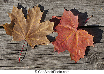 top view color autumn leaves   of maple  on rustic wooden background