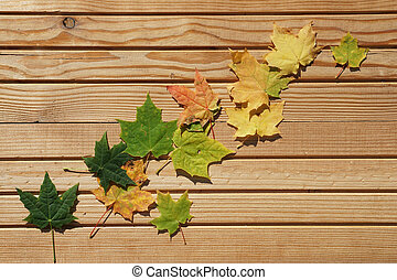 top view color autumn leaves    on wooden background with copy space in minimal style, template for lettering,