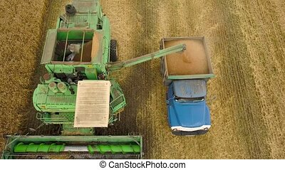 Top view combine harvester pours out wheat into the truck at sunset. Harvesting grain field, crop season.