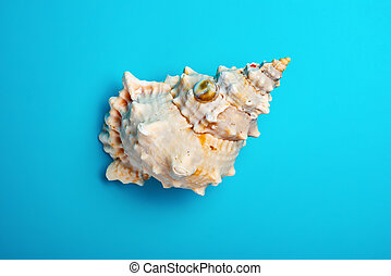 top view conch shell on a blue background