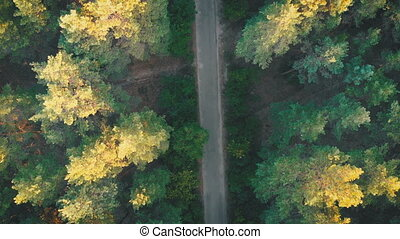 Top view Flying over Old Patched Forest Road. Woods growing...