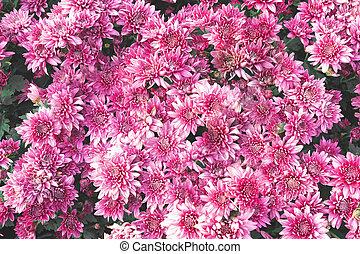 top view fresh pink flower garden pattern background
