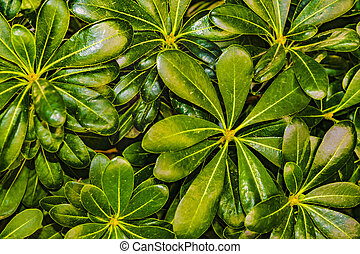 Top View Leaves Background