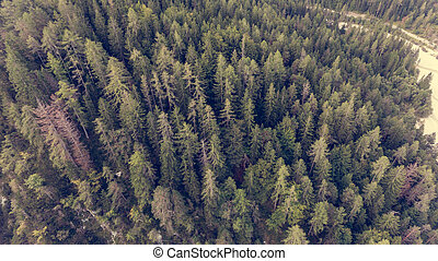 Top view of a forest.