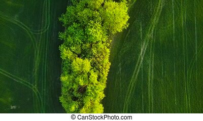 Top view of a green field and trees at sunset. Summer rural...