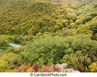 Top View of a Green Forest