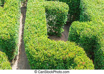 Top view of a green garden maze .