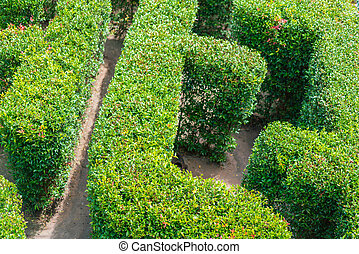 Top View Of A Green Garden Maze