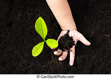 little seedling young tree in black soil on child's hands