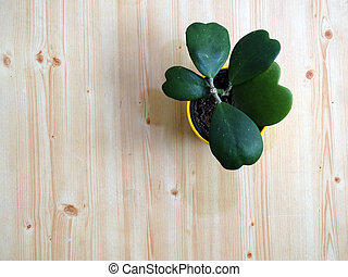 Top View of a Hoya Cactus with Heart shaped Leaves in a Flower pot on Wooden Background